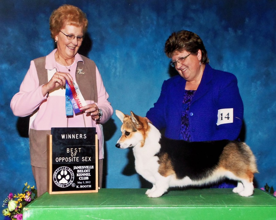 Olive Janesville / Beloit Kennel Club 2012